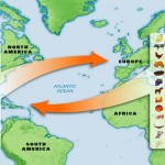 Columbian Exchange Lesson Plan - Age of Exploration